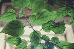 Het close-up van bloembladeren in het binnenland Royalty-vrije Stock Fotografie