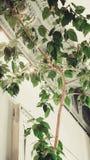 Het close-up van bloembladeren in het binnenland Stock Foto