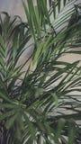 Het close-up van bloembladeren in het binnenland Royalty-vrije Stock Foto's