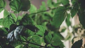 Het close-up van bloembladeren in het binnenland Royalty-vrije Stock Afbeeldingen