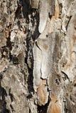 Het close-up van de boomschors stock afbeelding