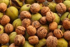 Het Close-up van de de herfstoogst op okkernoten schilde vers en op noten in groene schil stock afbeelding