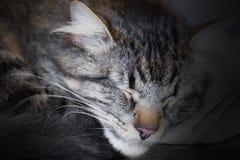 Het close-up van de kattenslaap Stock Foto's