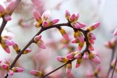 De knoppen van de bloem royalty-vrije stock fotografie