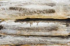Het close-up van de logboekmuur Stock Foto