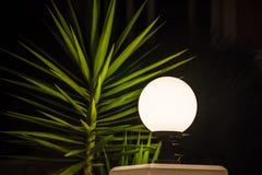 Het close-up van de palmtak Schietend bij nacht, donkere zwarte achtergrond De groene bladeren worden aangestoken door het licht  Stock Fotografie