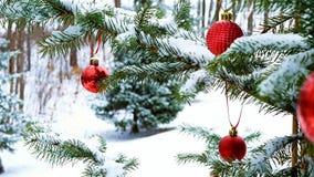 Het close-up van de rode Ballen die van Kerstmissnuisterijen op sneeuw hangen behandelde de takken van de pijnboomboom stock videobeelden
