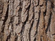 Het close-up van de wilgenschors Stock Fotografie