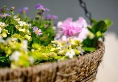 Het close-up van een onlangs geplante hangende mand die een verscheidenheid van jongelui, de zomer tonen bloeit stock foto's