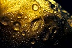 Het close-up van gouden nam toe Stock Fotografie