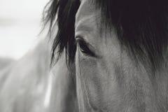Het Close-up van het paardoog Royalty-vrije Stock Afbeelding