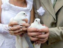 Het close-up van huwelijksduiven in de handen van de bruid en de bruidegom Royalty-vrije Stock Foto's