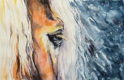 Het close-up van het paardenoog Royalty-vrije Stock Fotografie