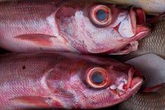 Het close-up van purple twee met zilver schittert schalen verse overzeese vissen Stock Afbeeldingen