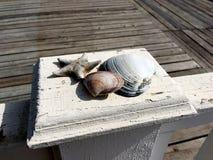 Het close-up van zeeschelpen en een droge zeester liggen op een houten witte haag stock foto