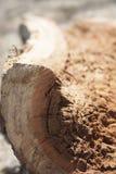 Het close-upbeeld van rot houten Bruin stof rotte logboek royalty-vrije stock afbeelding