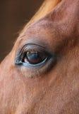 Het close-updetail van het paardoog met bezinning van werf Royalty-vrije Stock Afbeeldingen