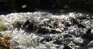 Het close-upschot van waterstromen in een bergkreek met de gele en bruine herfst gaat rond weg stock footage