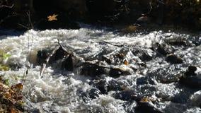 Het close-upschot van waterstromen in een bergkreek met de gele en bruine herfst gaat rond weg stock videobeelden