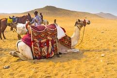 Het comfort in woestijn Stock Foto