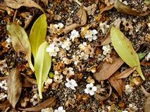 Het Compost van de grond Stock Afbeeldingen