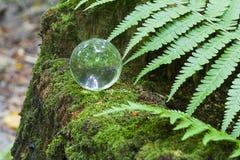 Het concept aard, groene boskristallen bol op een houten stomp met bladeren Glasbal op een houten die stomp met mos wordt behande Royalty-vrije Stock Foto's