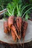 Het concept gezonde het eten wortelen Royalty-vrije Stock Fotografie