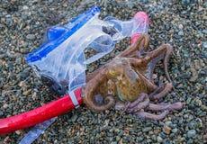 Het concept-masker van de de zomervakantie voor het duiken en buis met octopus op een overzees strand Royalty-vrije Stock Afbeeldingen