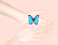 Het concept schoonheid De blauwe vlinder is in de handen van de mens stock foto's