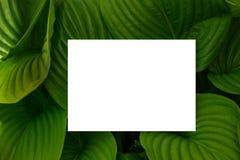 Het concept van de aard Lay-out met textuur een groen bladclose-up Achtergrond met Bladeren en wit kader royalty-vrije stock afbeeldingen