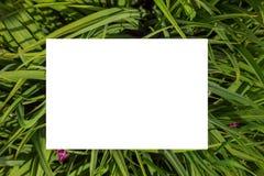 Het concept van de aard Lay-out met textuur een groen bladclose-up Achtergrond met Bladeren en wit kader stock foto