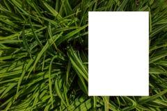 Het concept van de aard Lay-out met textuur een groen bladclose-up Achtergrond met Bladeren en wit kader royalty-vrije stock foto