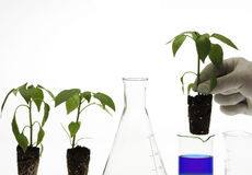 Het concept van de biotechnologie royalty-vrije stock afbeeldingen