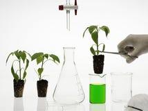 Het concept van de biotechnologie Stock Foto