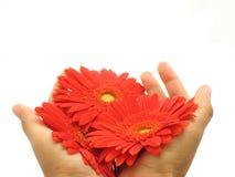 Het concept van de bloem Royalty-vrije Stock Foto's