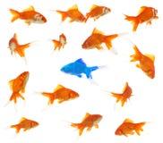 Het concept van de diversiteit royalty-vrije stock afbeeldingen