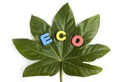 Het concept van de ecologie Royalty-vrije Stock Fotografie
