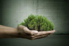 Het concept van de ecologie royalty-vrije stock afbeelding