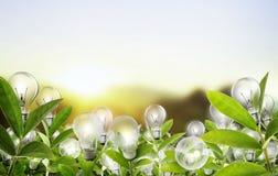 Het concept van de gloeilampen Alternatieve energie Royalty-vrije Stock Foto