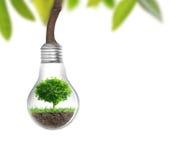 Het concept van de gloeilampen Alternatieve energie Stock Foto's