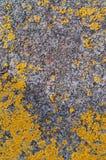 Het concept van de het korstmosclose-up van de metaalroest - oud roestig metaal met korstmos Stock Afbeeldingen