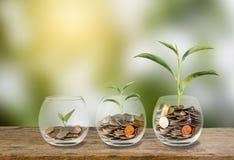 Het Concept van de investering De groeiinstallatie op muntstukken in drie stappen in glas stock foto's