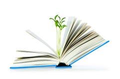 Het concept van de kennis met boeken Royalty-vrije Stock Afbeeldingen