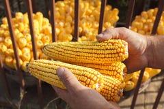 Het concept van de landbouw Stock Foto