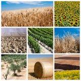 Het concept van de landbouw Royalty-vrije Stock Foto