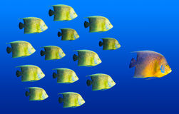 Het concept van de leiding - het grote vissen leiden Stock Fotografie