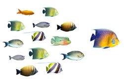 Het concept van de leiding - het grote vissen leiden stock afbeelding
