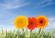 Het concept van de lente Stock Afbeelding