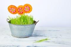 Het concept van de lente De bloem van de suikergoedlolly in bloempot met gras Stock Foto
