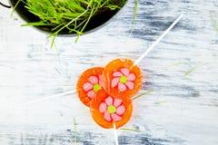 Het concept van de lente De bloem van de suikergoedlolly in bloempot met gras Stock Fotografie